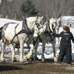 Misty Haven Carriage Horse Team